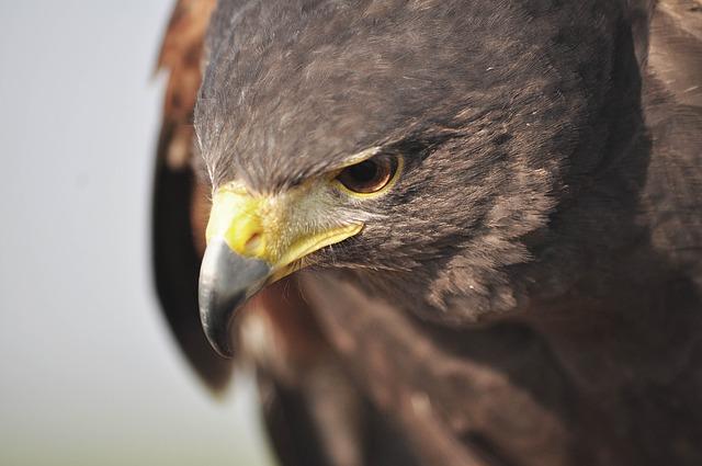 鳥のような俯瞰の目が大事な理由