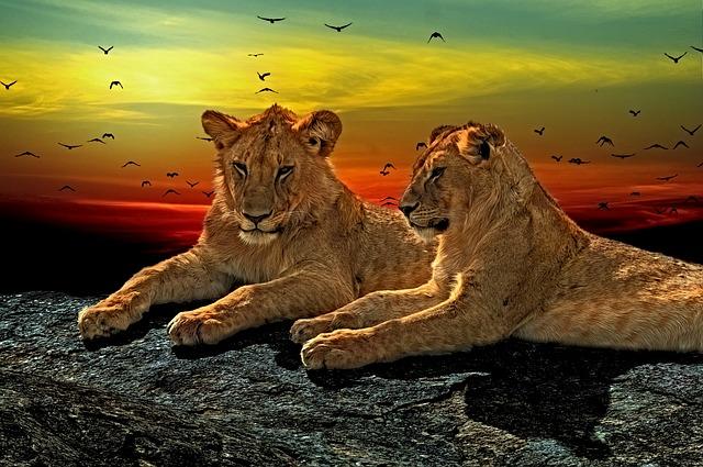 ライオンが最強の理由