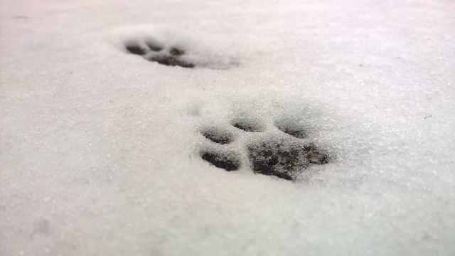 雪での恐怖体験談!
